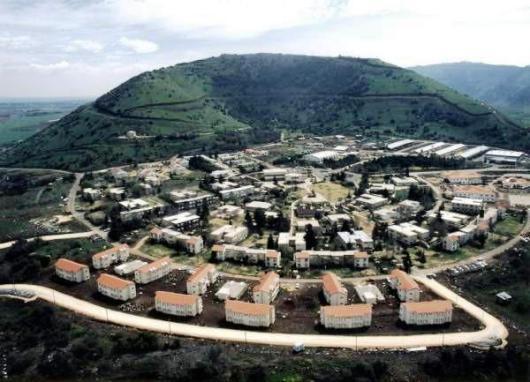 אלבטרוס